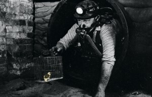 Canary in Coal Mine